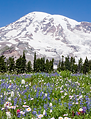 Washington State Visitors Guide