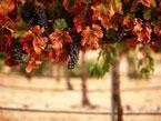 Washington State Wine Country