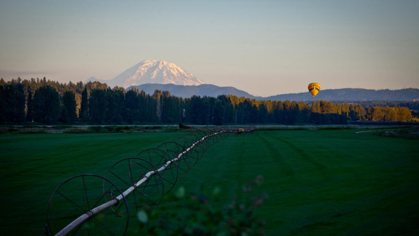 Woodinville nature, wine, balloons