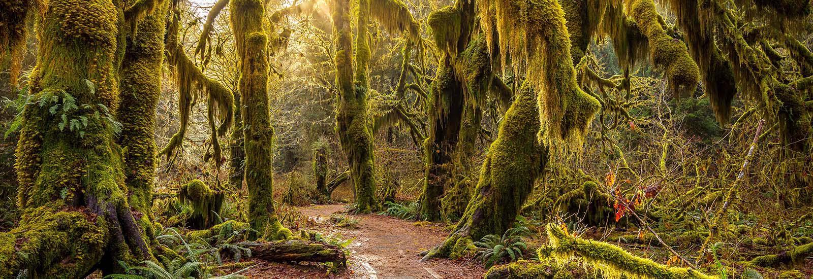 Hoh Rain forrest moss